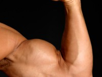 The process in which anabolic steroids may make body muscular